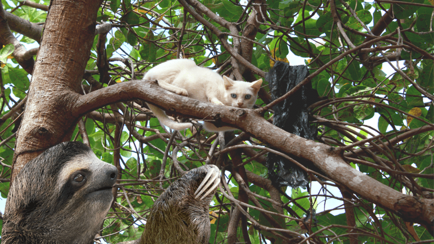 A sloth rescuing a cat stuck in a tree