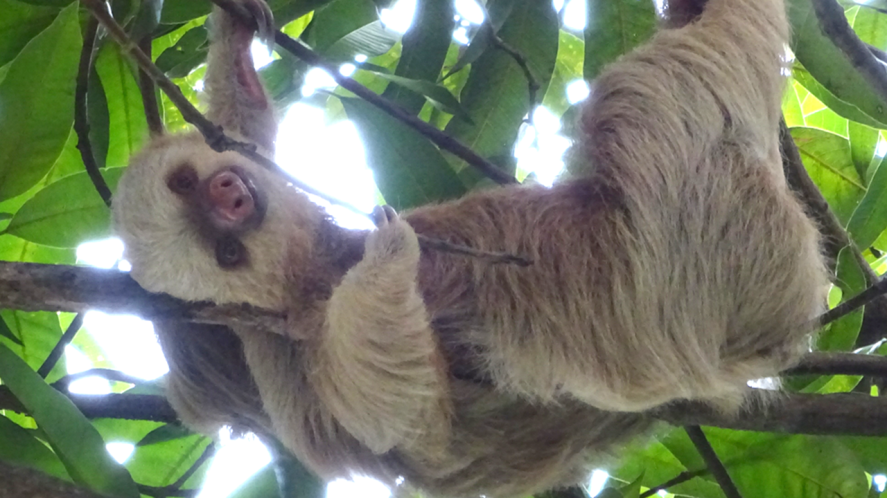 Sloth cares about you