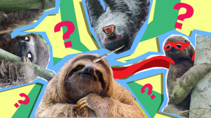 what sloth are you?