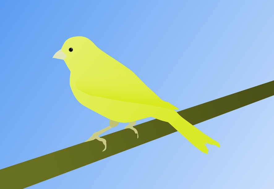 An illustration of a canary