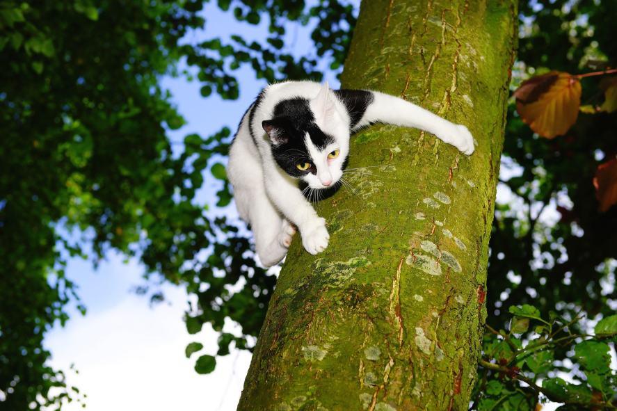 A cat climbing a tree