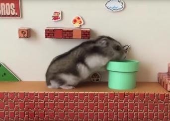 Super Hamster Bros