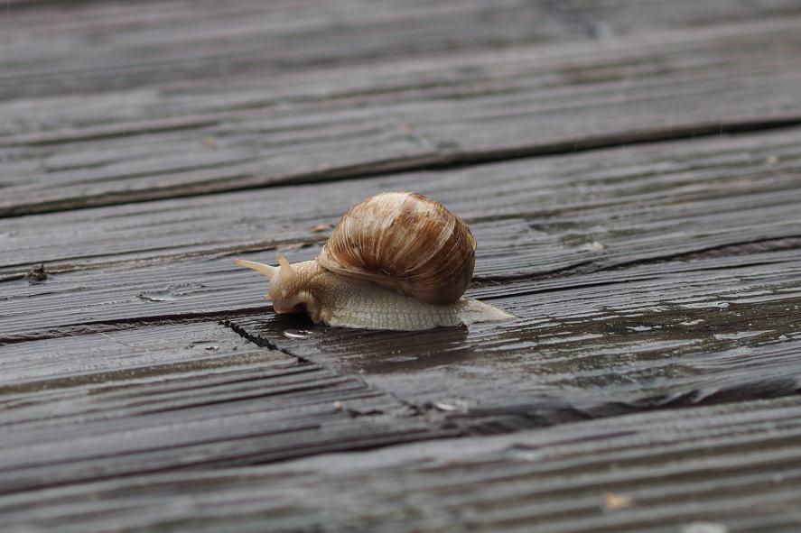 A snail in the rain