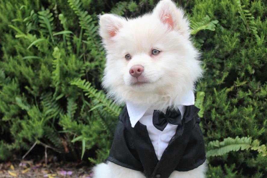 A fancy dog