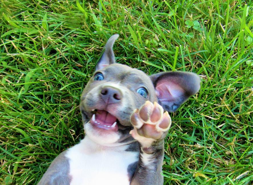 Dog waving with paw