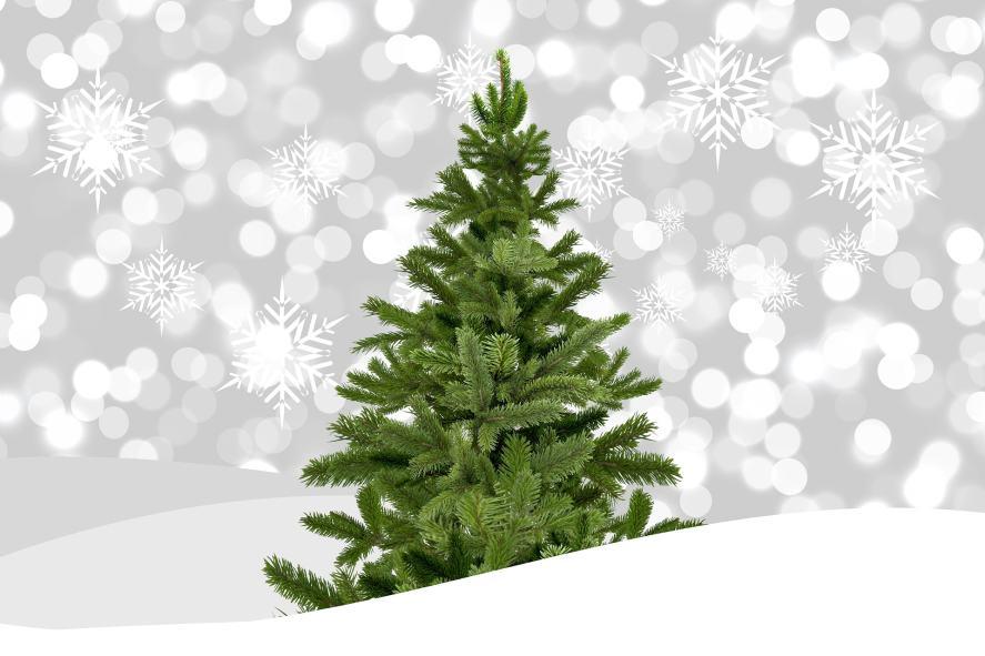 Christmas Song Quiz - Christmas Tree