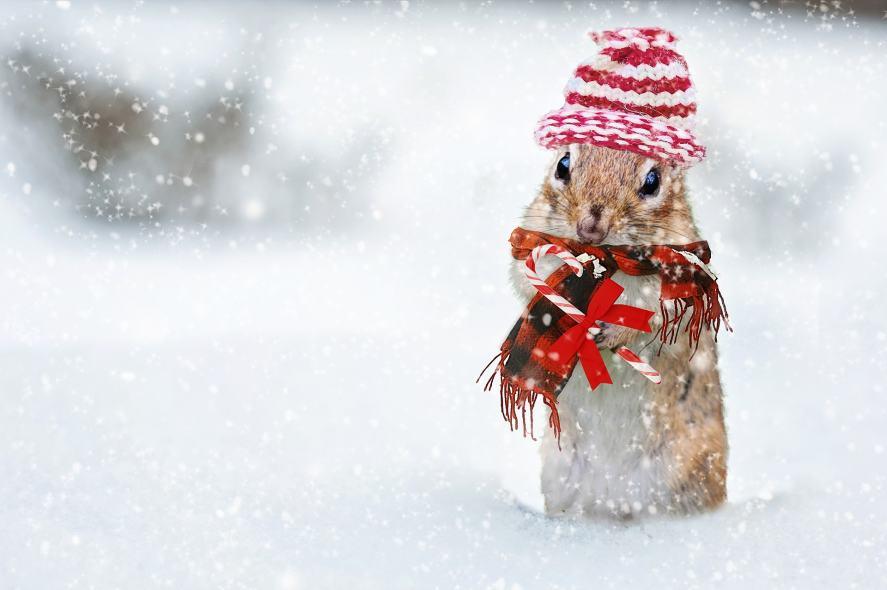 Christmas Song Quiz - Christmas Squirrel