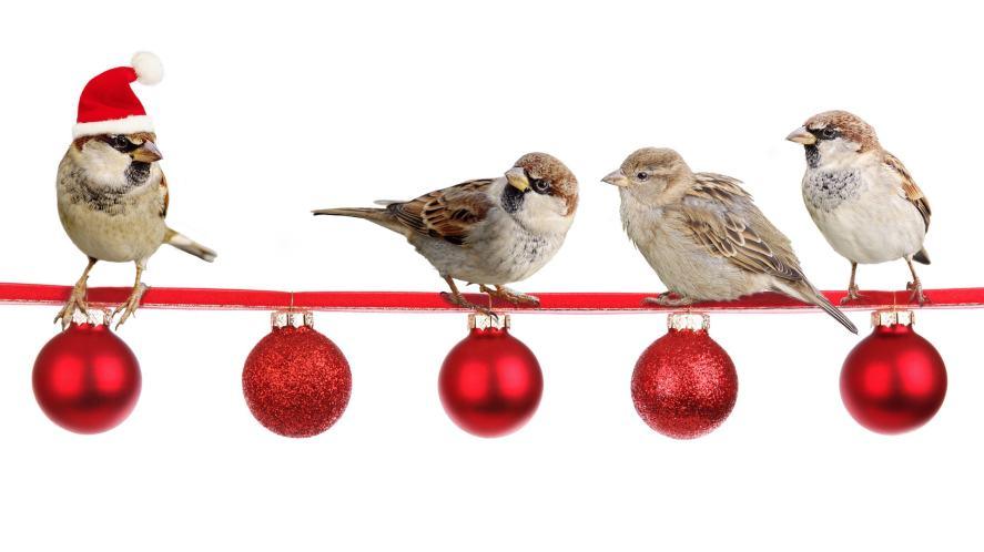 Christmas Song Quiz - Robins