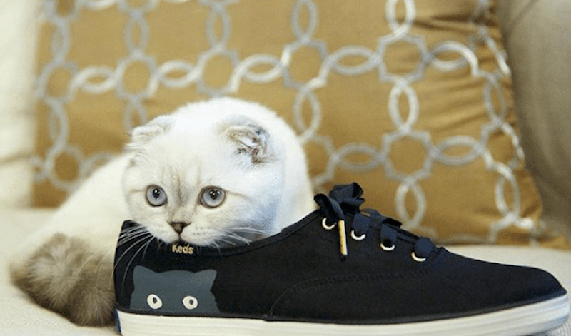 A small white cat takes a rest inside a big shoe