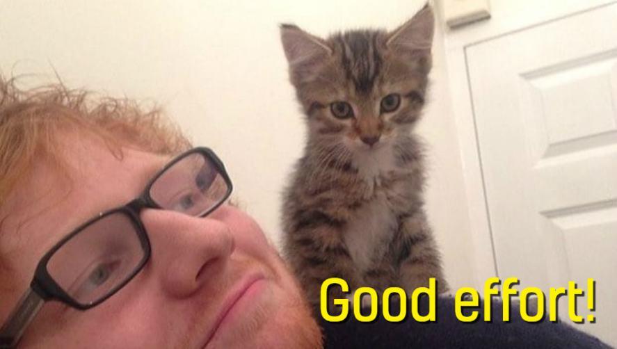 Ed Sheeran and a kitten