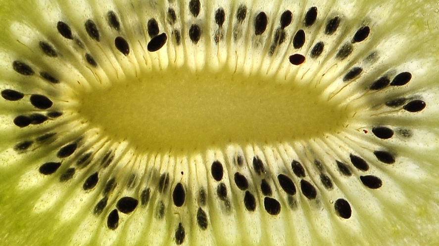 A fruit full of many seeds