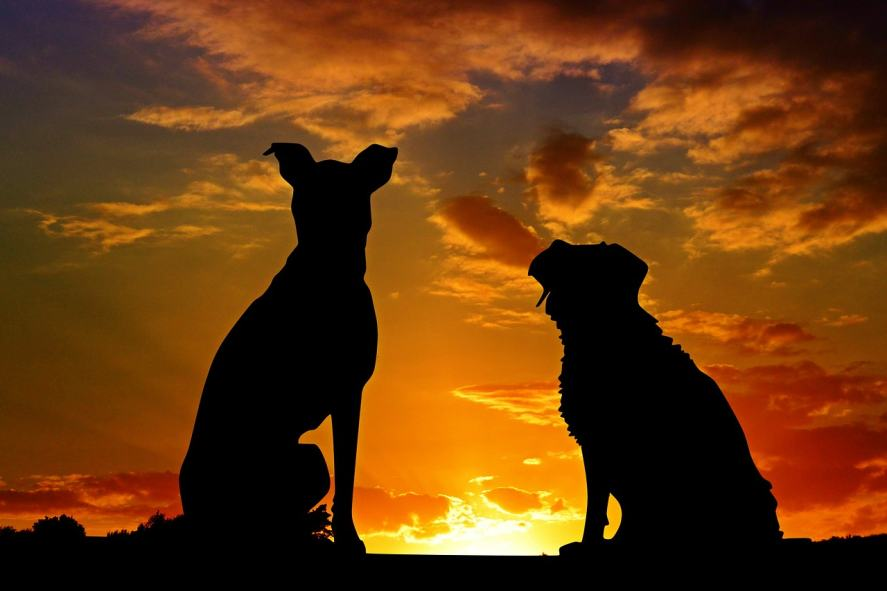 Two dogs looking out towards the sunset