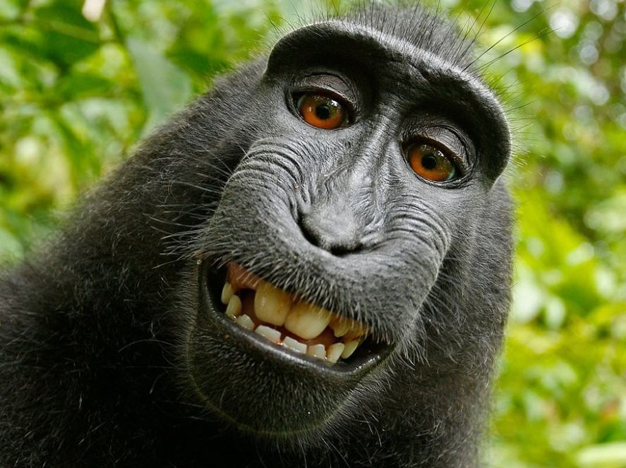An amused monkey