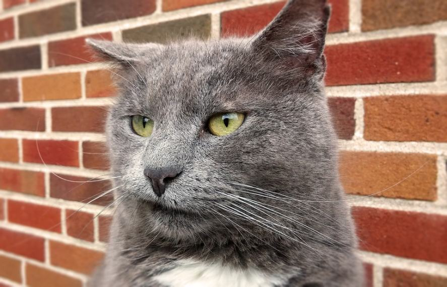 A vengeful cat