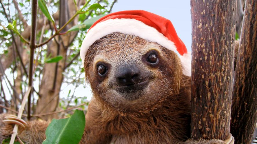 A sloth wearing a Santa Claus hat helping us calculate slime names