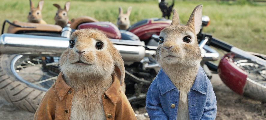 Peter Rabbit and his cousin