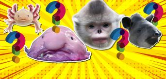 Weird animals personality quiz