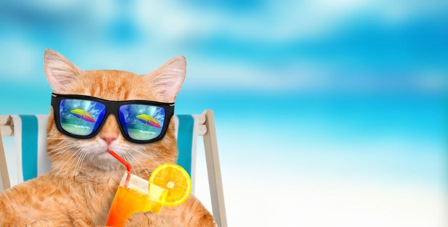 A cat enjoying the sunshine