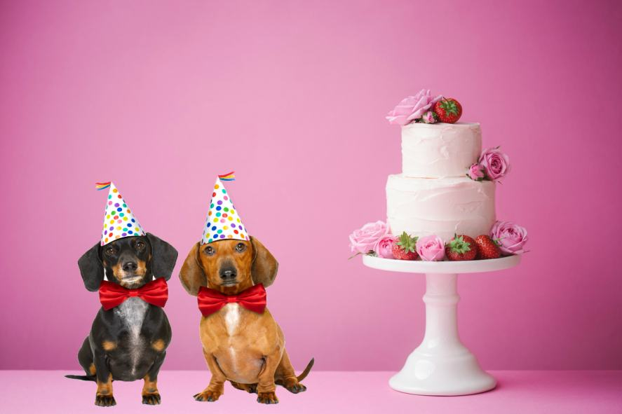 Two dogs look forward to a slice of cake