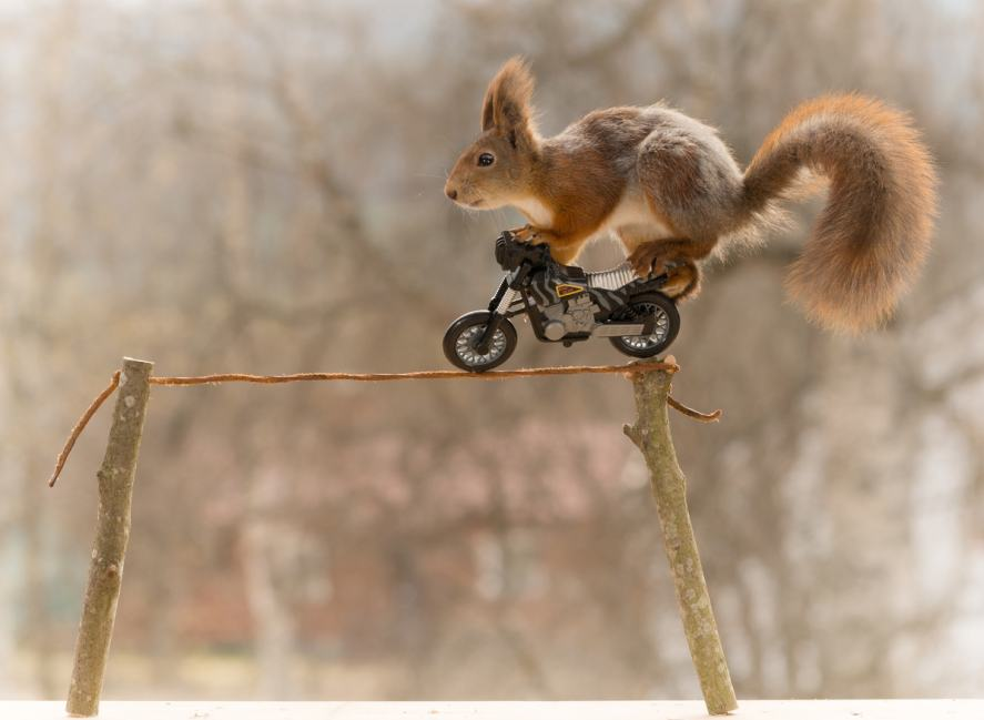 A squirrel riding a motorcycle