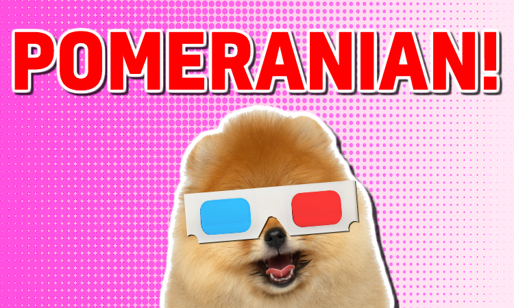 A Pomeranian wearing old-fashioned 3D glasses