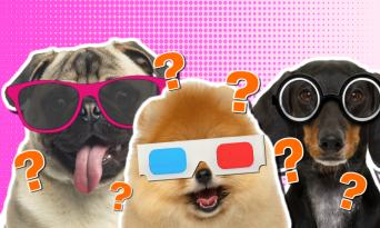 Dogs personality quiz