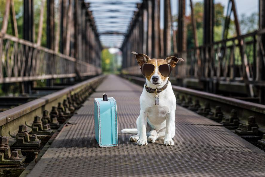 A dog with a suitcase