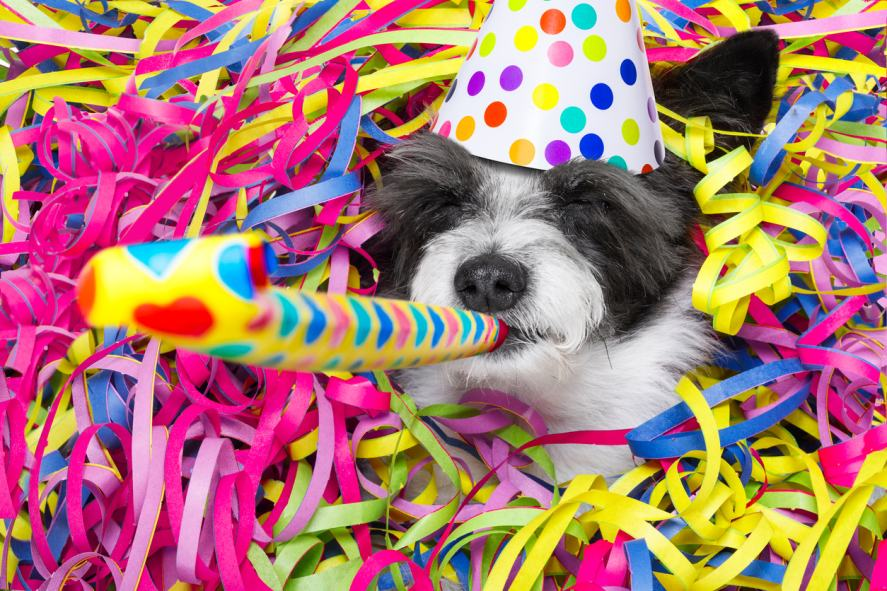 A dog at a party