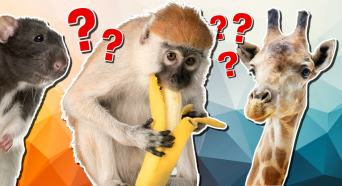 Animal collective nouns quiz