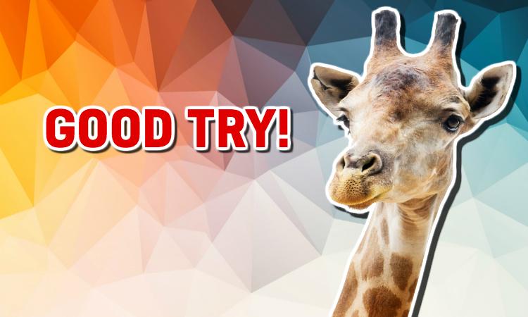 A giraffe praises your quiz efforts