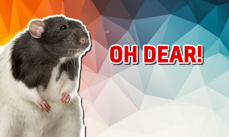 A rat looks nervously at your score