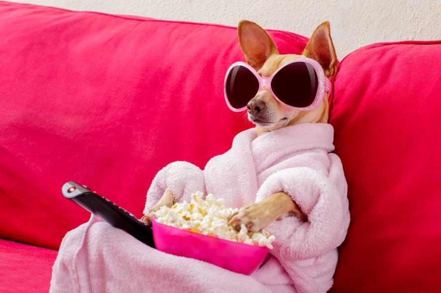 A dog enjoying a bowl of popcorn
