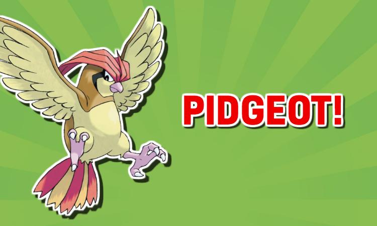 Pidgeot Pokemon