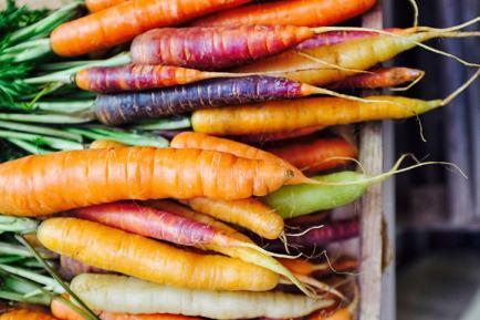 Different varieties of carrot