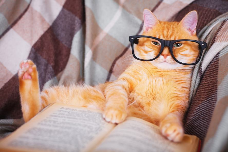 Red cat in glasses lying on sofa with book