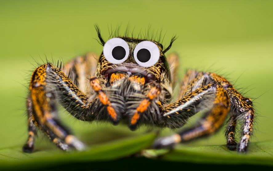 A googly-eyed spider
