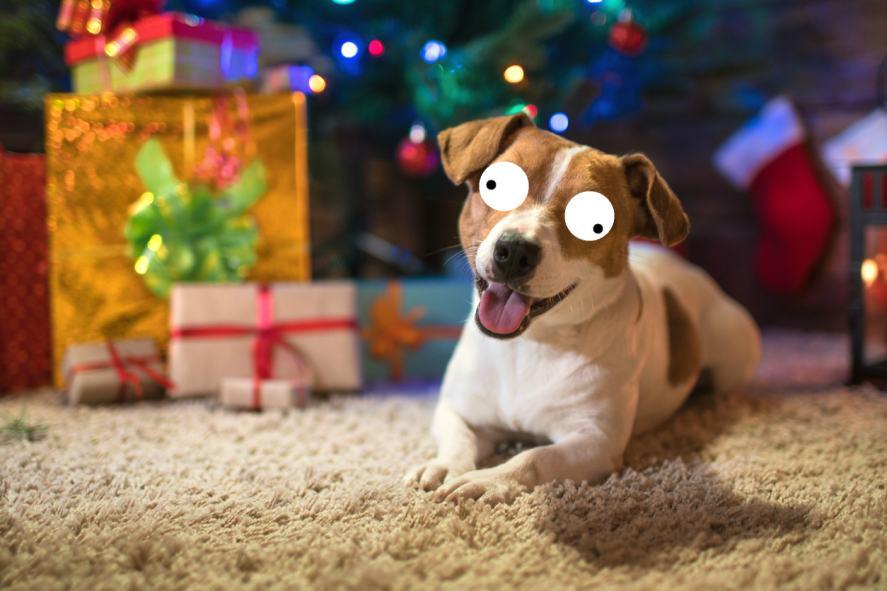 A dog on a rug at Christmas