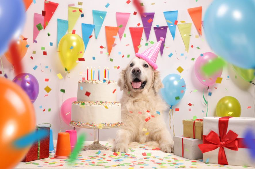 A dog enjoying its birthday party