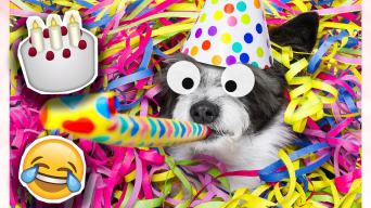 Dog blowing party popper