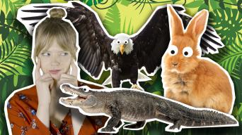 Emma and some animals. A crocodile, eagle and rabbit