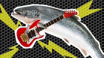 fish rocking their guitar