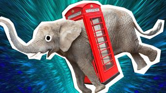 elephant in a phonebox