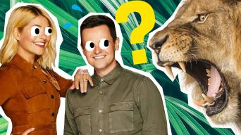 holly and dec vs a lion