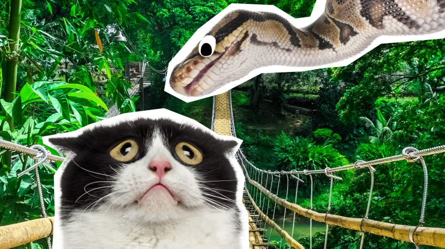 A cat looking scared at a snake