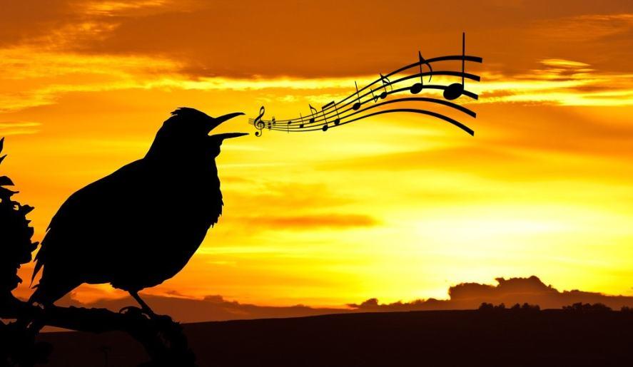 A bird singing at sunset