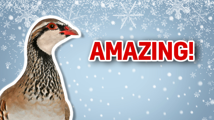 This partridge is thrilled with your score