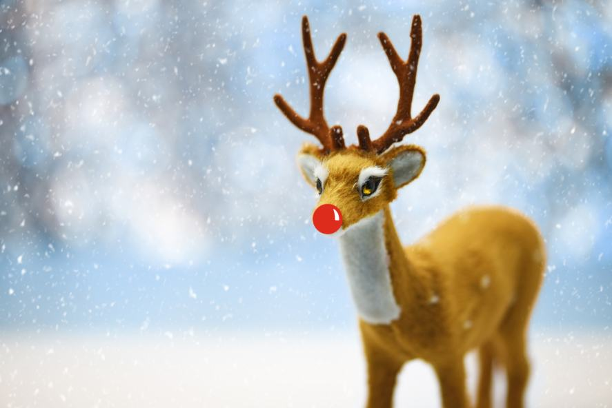 A red-nosed reindeer