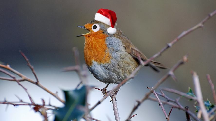A robin in a Christmas hat