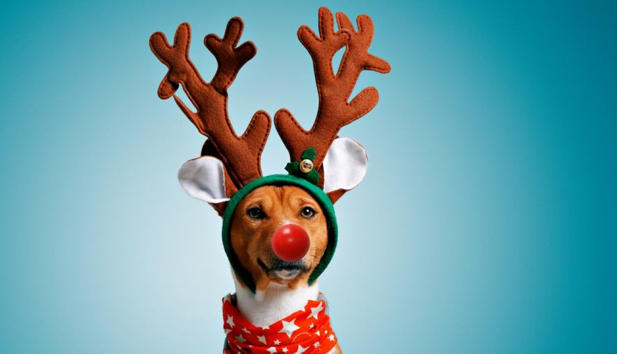 A dog dressed up as Rudolph