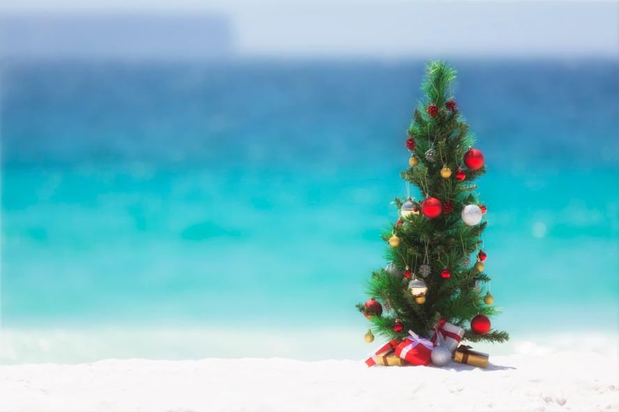 A Christmas tree on a beach
